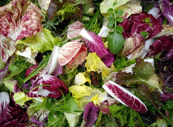 Trill Farm Garden salad and herb bags