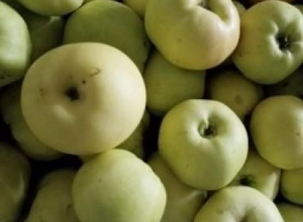 Apples - Cooking Bramley Organic