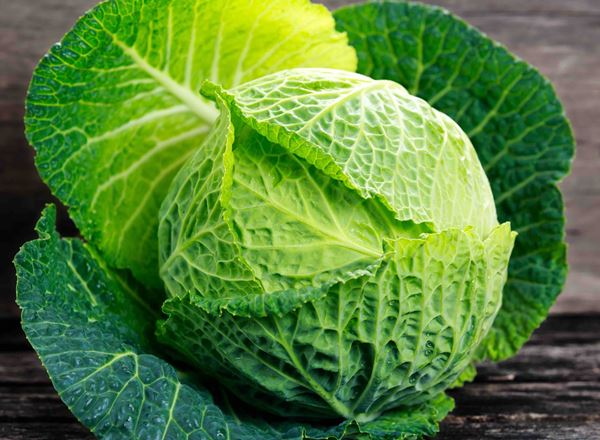 Cabbage Savoy