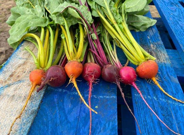Beetroot, Rainbow: Organic (Bunch)